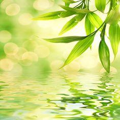 Zen in nature - ripples & leaves