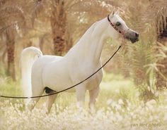 Beautiful horse in the world Top 20 Most Beautiful Horses In The World