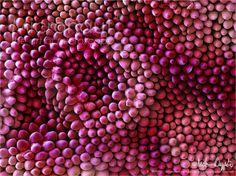 Rose petal fine structure The fine art of microscopy by science photographer Martin Oeggerli