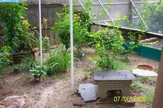 I have seen numerous suggestions for Russian tortoise diet Some great Some awful. Russian Tortoises are nibblers and appreciate broad leaf plants. Tortoise House, Tortoise Care, Red Footed Tortoise, Giant Tortoise, Tortoise Enclosure, Sulcata Tortoise, Russian Tortoise, Pet Turtle, Hens And Chicks