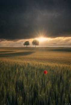 Beautiful Photos Of Nature, Coffee Art, Red Poppies, Places To Go, Nature Photography, Sunrise, Country Roads, Clouds, Explore