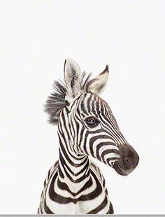 sharon montrose zebra print