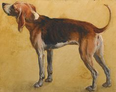 Follower of Alexandre François Desportes STUDY OF ROUGEAUDE, A BEAGLE BELONGING TO LOUIX XIV oil on paper, laid on card