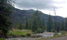 Pebble Creek Campground in Yellowstone