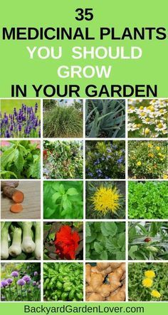 Grow a few of these medicinal plants in your garden: they're beautiful, and will come in handy when you need natural remedies for your family #gardening #naturalremedies #medicinalplants #herbs #organic