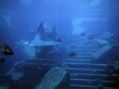 Crystal+Pyramid+Under+Bermuda+MSN | ... AND SNAPPITS: GIANT CRYSTAL PYRAMID DISCOVERED IN BERMUDA TRIANGLE