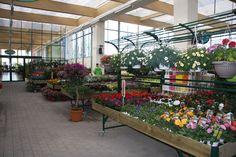 Uno scorcio dell'area dedicata alle piante fiorite da esterno, nel nuovo punto vendita Viridea all'interno del centro commerciale Il Centro di Arese