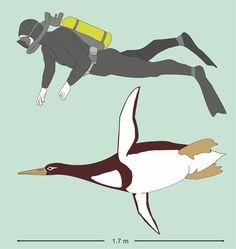 Human-sized penguins once waddled around New Zealand