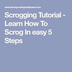 Scrogging Tutorial - Learn How To Scrog In easy 5 Steps