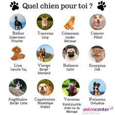 1 #chien, 1 signe #astro 🐕 On dit que c'est le meilleur ami de l'homme ;) N'est-ce pas amis Scorpion ? #zodiaque #signeduzodiaque #signes #astro #astrologie #horoscope #horoscopes #astrology #signeastro #signeastrologique #Belier #Taureau #Gémeaux #Cancer #Lion #Vierge #Balance #Verseau #Scorpion #Sagittaire #Capricorne #Poissons #chien #animaux #bouledogueanglais #caniche #corgi #pinscher #chat #carlin #bordercollie #chihuaha Astrology Aquarius, Zodiac Signs Gemini, Zodiac Art, Astrology Signs, Scorpion Sign, Zodiac Signs Animals, Virgo And Cancer, Zodiac Personalities, French Expressions