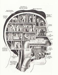 The head room