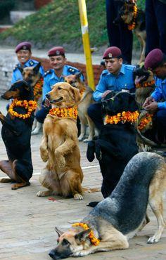 perros con coronas de flores en el festival de perros en Nepal