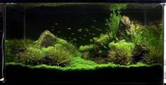 Aquascaping | 90P Iwagumi rock garden - Page 8 - Aquascaping - Aquatic Plant Central