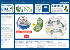 In this infographic we explore nutritional interventions for the optimisation of mitochondrial function for energy production and healthy ageing. Health Diet, Health And Wellness, The Cell, Anti Aging, Medicine, Healing, Nutrition, Infographics, Probiotic Foods