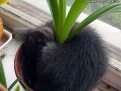 Plant Cat Funny Wallpaper