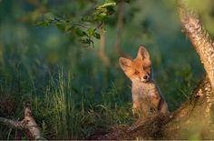 Las fotos favoritas de National Geographic de 2015