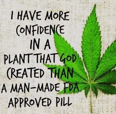 Your global source for the latest marijuana news in Along with the Best CBD products, and a up to date watch on weed legalization. Free Your Mind, Endocannabinoid System, Cbd Hemp Oil, Pin On, Medical Cannabis, Health Magazine, Smoking Weed, Alternative Health, Health Benefits