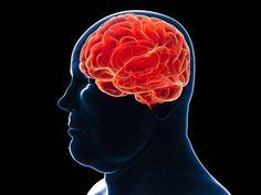 Scoperto il processo molecolare che lega l'obesità al declino della memoria.