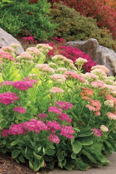 13 Great Low Water Plants : HGTV Gardens