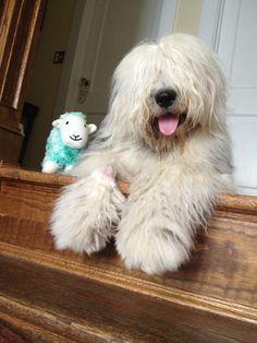 Indigo with her sheepie :)