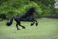 Dit Paard Wordt Beschouwd Als Het Mooiste Paard Ter Wereld: Zijn Elegantie Is Onbeschrijflijk!
