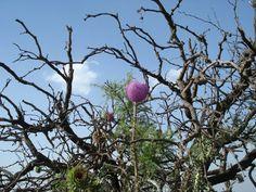 Flor de cardo. Autor de la foto JFG