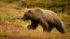 «Любить природу не вмешиваясь в нее!» Фотограф Ральф Ли Хопкинс (Ralph Lee Hopkins) — Фотоискусство