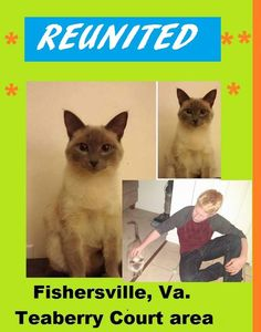 Reunited Cat Augusta County Virginia She was in our back yard and ran into a storm drain and my son got her out of there. :) Apr. 2015
