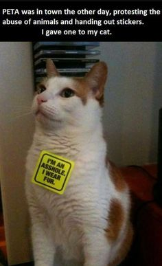 PETA was in town handing out stickers. I gave one to my cat. Lol #catsofpinterest