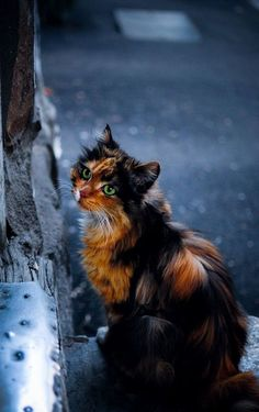 Pretty, dark, calico