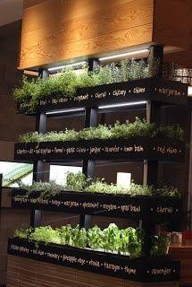Grow Herbs Indoors this Winter