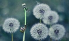 Ethereal Photographs Capture The World Of Snails