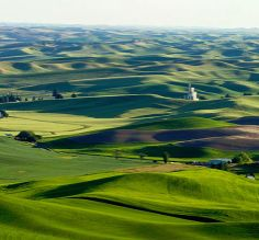 Palouse region of Idaho and Washington states home of Moscow, Pullman, and my wonderful children.