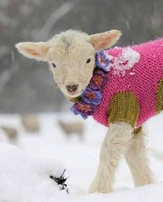 What can you say about a lamb wearing a wool sweater? This is what my friend Ruth said! And I say, Oh, he is so cute!!!!