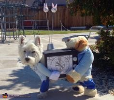 Paulette: My Westie, Cody, is wearing the costume. Don't mistake him for his partner in the rear, Sam Sung. :-) Having issues with your TV? Call the professionals! The idea came...