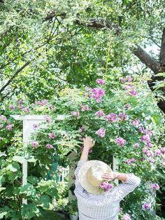 Grandmas Garden, Plants, Plant, Planets