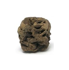 Fossil Pine Cone from a Sequoia Tree  Petrified by FenderMinerals