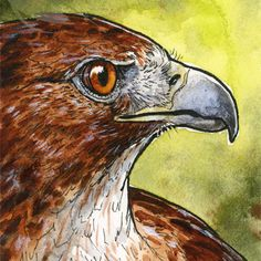 Rot-angebundener Falke mini Aquarellmalerei