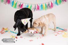 Verjaardag Labrador Juno - 3 jaar - Doggy Cakesmash-17