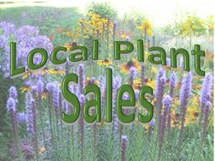 Plant Sales are a primary source of funding for many hard working garden related volunteer organizations. These groups help to make our local communities brighter and more beautiful and a better place to live. Across Lanark County, May is the month that your local Horticultural Societies host their Plant Sale. Lanark County Master Gardeners will be at all the Horticultural Societies Plant Sale and we will be selling plants at the Perth Sale. See Calendar on the right for sale dates and… Volunteer Organizations, Garden Centre, Buy Plants, Unusual Plants, Best Places To Live, Plant Sale, Trees And Shrubs, Native Plants, Beautiful Gardens