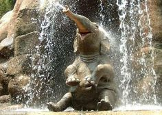 Funny pictures about Happy elephant makes me happy. Oh, and cool pics about Happy elephant makes me happy. Also, Happy elephant makes me happy photos. Happy Animals, Animals And Pets, Funny Animals, Smiling Animals, Wild Animals, Adorable Animals, Laughing Animals, Animals Images, Photos Of Animals