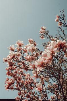 Wallpaper spring