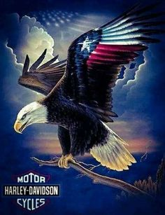 H.A'S Patriotic Pictures, Eagle Pictures, Harley Davidson Gifts, Harley Davidson Iron 883, Eagle Painting, Great America, Eagle Art, Eagle Tattoos, Native American Art