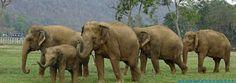 """""""O Grito do Bicho"""": O poder de uma canção em santuário de elefantes na..."""