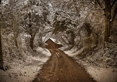 """Walking in the woods on a snowy evening, By Robert Frost. """"who's woods these are, I think I know....."""""""