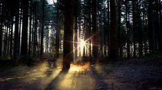 Los árboles sienten cuando están siendo comido por los ciervos. Por eso lanzan una malévola defensa