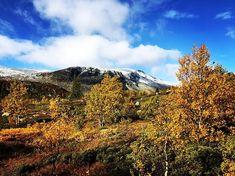 Høst Mount Rainier, My World, Fish, Mountains, Nature, Travel, Instagram, Viajes, Naturaleza