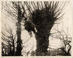 http://archives.queensu.ca/Exhibits/queensremembers/wwi/Firing_Line_6_Sniper_in_tree.jpg