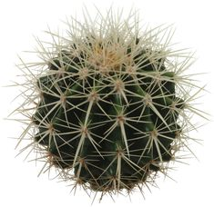 cactus png - Google Search