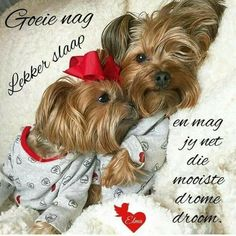 Good Night Blessings, Good Night Wishes, Good Night Sweet Dreams, Good Night Messages, Good Night Quotes, Goeie Nag, Afrikaans Quotes, Yorkie Puppy, Special Quotes